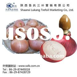 chinese pure onion extract best price(GMP.HACCP)