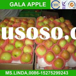 Chinese fresh new apple gala(good quality,cheap price)