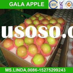 New Crop Chinese fresh red gala apple(good quality,cheap price)