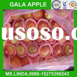 New Crop fresh chinese gala apple(good quality,cheap price)