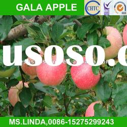 New Crop china gala apple(good quality,cheap price)
