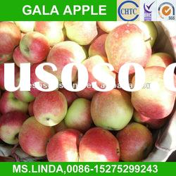 New Crop china delicious gala apple(good quality,cheap price)