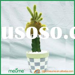 cactus natural flowering plants (Grafted Cactus indoor plants)