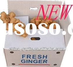 Price Ginger 2012 new crop, low cost, high quality