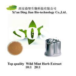 10:1/20:1 High quality Wild Mint Herb Extract