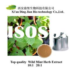 Green High quality Wild Mint Herb Extract