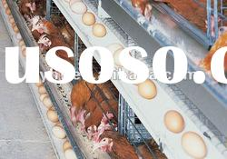 automatic poultry feeding machine--egg collection system