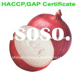 fresh red onion with best price