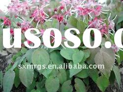 top quality Epimedium extract powder