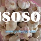 fresh normal white /red garlic in pizhou