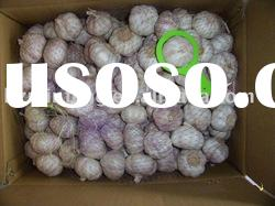 Chinese Normal White Garlic or Red Garlic Fresh with Best Price Loosing Packing