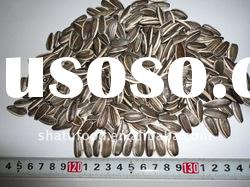 chinese long shape sunflower seeds for sale