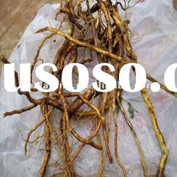 Baical Skullcap root Extract