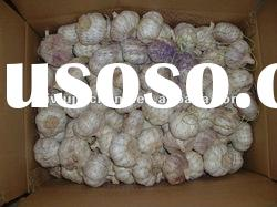 Fresh Garlic with good price superior quality
