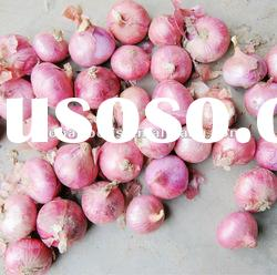 Fresh Hot Spice Onion Global Foods 2012 New Crop