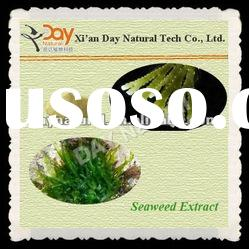 Top Quality Seaweed Extract Powder UV 10%-50% -- Natural Plant Extract