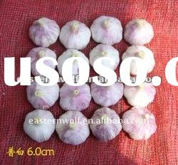 4-6cm chinese regular garlic (sale at good price)