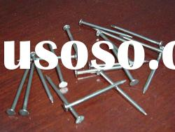 Sell Steel Concrete nails Galvanized