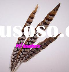 decorative pheasant tail feathers