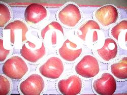 sell shaanxi fresh Red star apple(hot apple)
