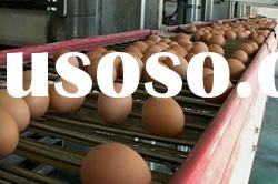 automatic poultry farming cage-the egg collection system