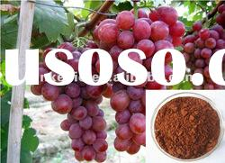 Plant Extract Grape Seed Extract Powder with 95% Proanthocyanidin