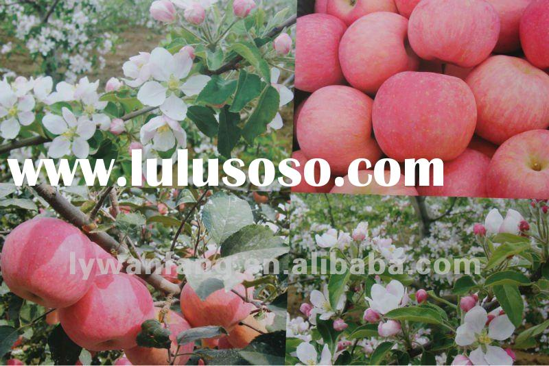 wholesale prices fresh crisp Fuji apple scientific name of fruits